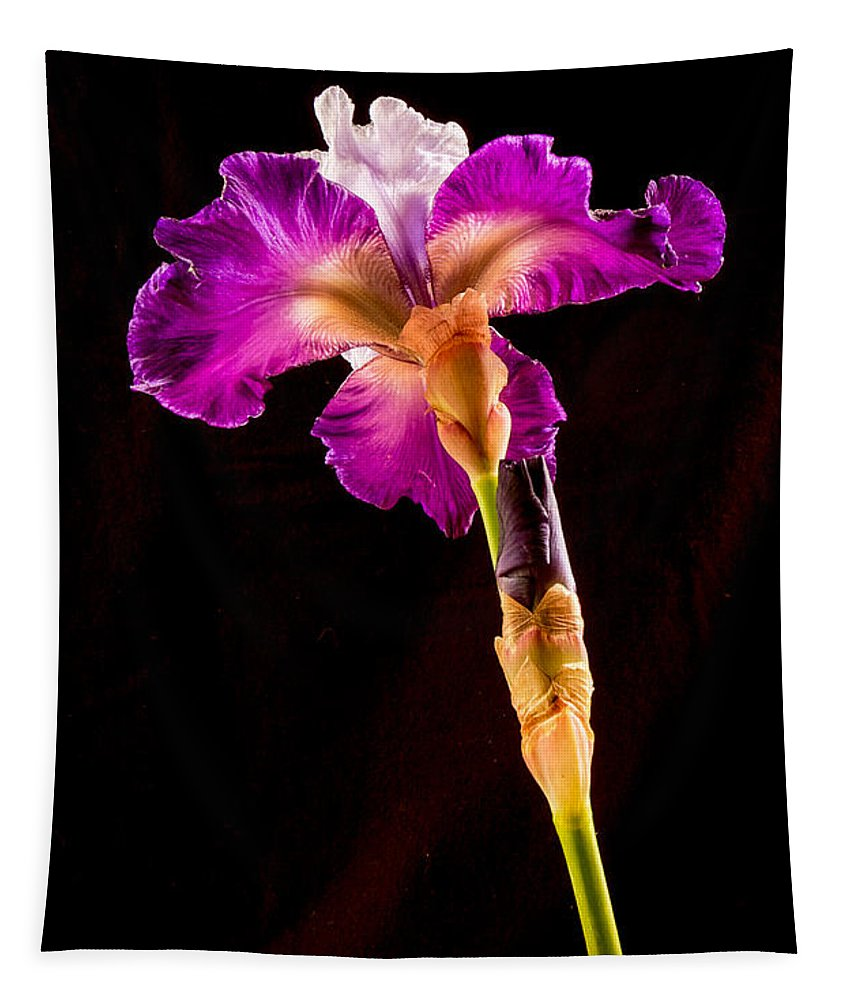 Iris Tapestry featuring the photograph Iris by Jean Noren