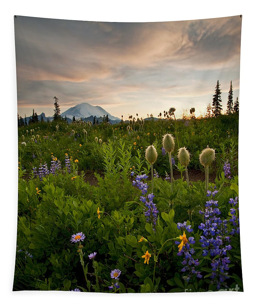 Aster Tapestry featuring the photograph Lupine Sunset by Mike Dawson