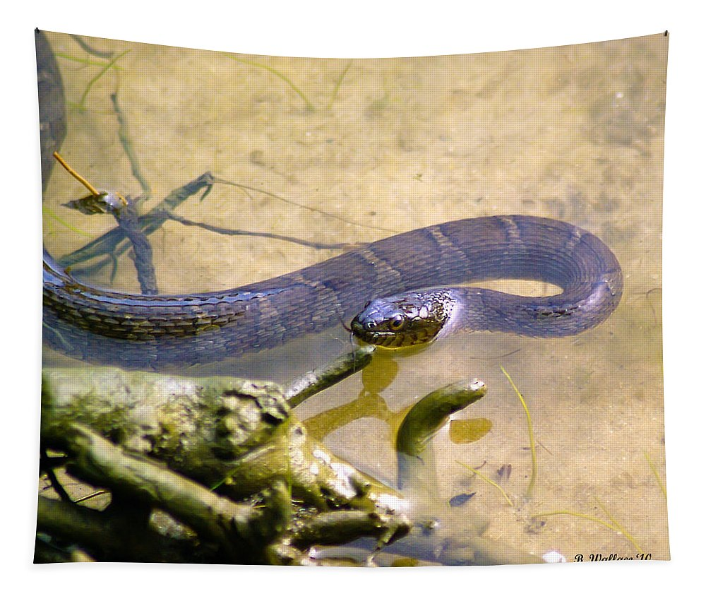 Brian Wallace Tapestry featuring the photograph Northern Water Snake by Brian Wallace