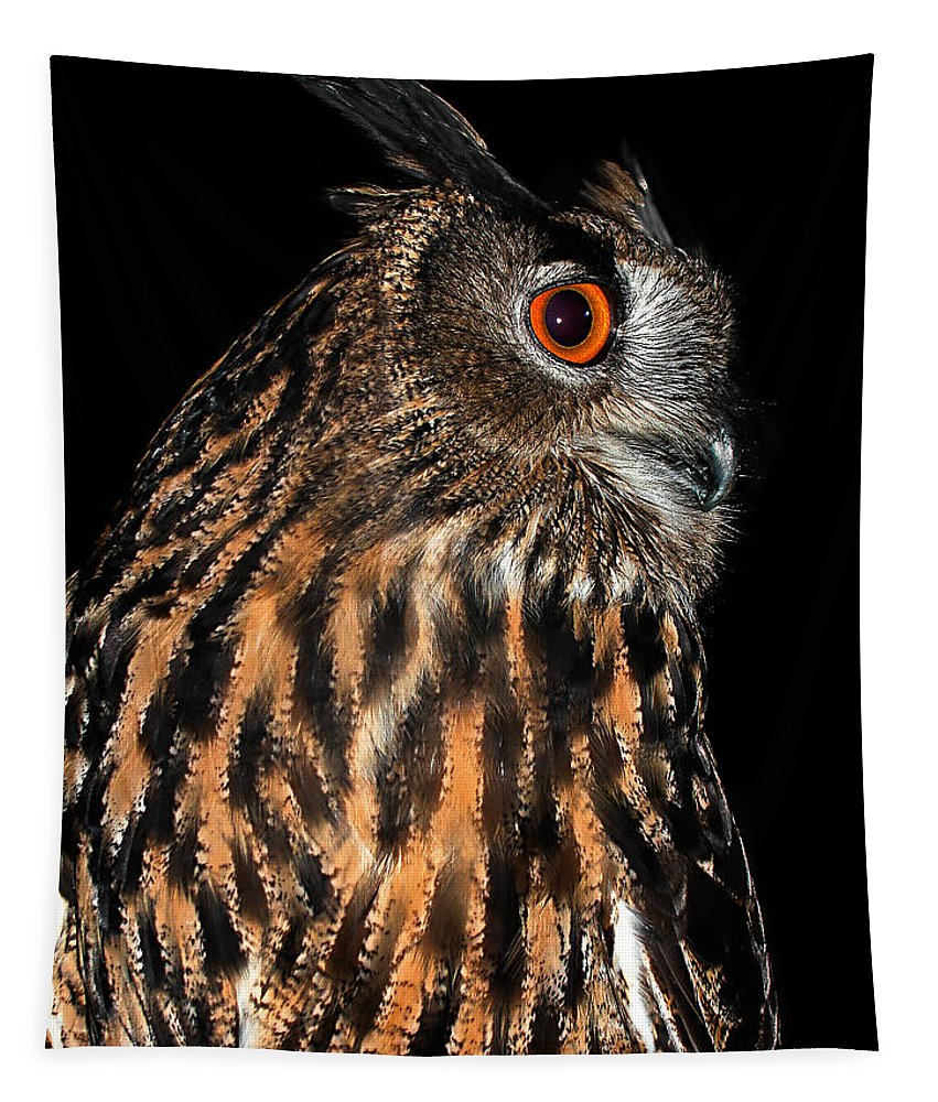 Owl Collection Tapestry featuring the photograph Side Portrait Of An Eagle Owl by Jean Noren