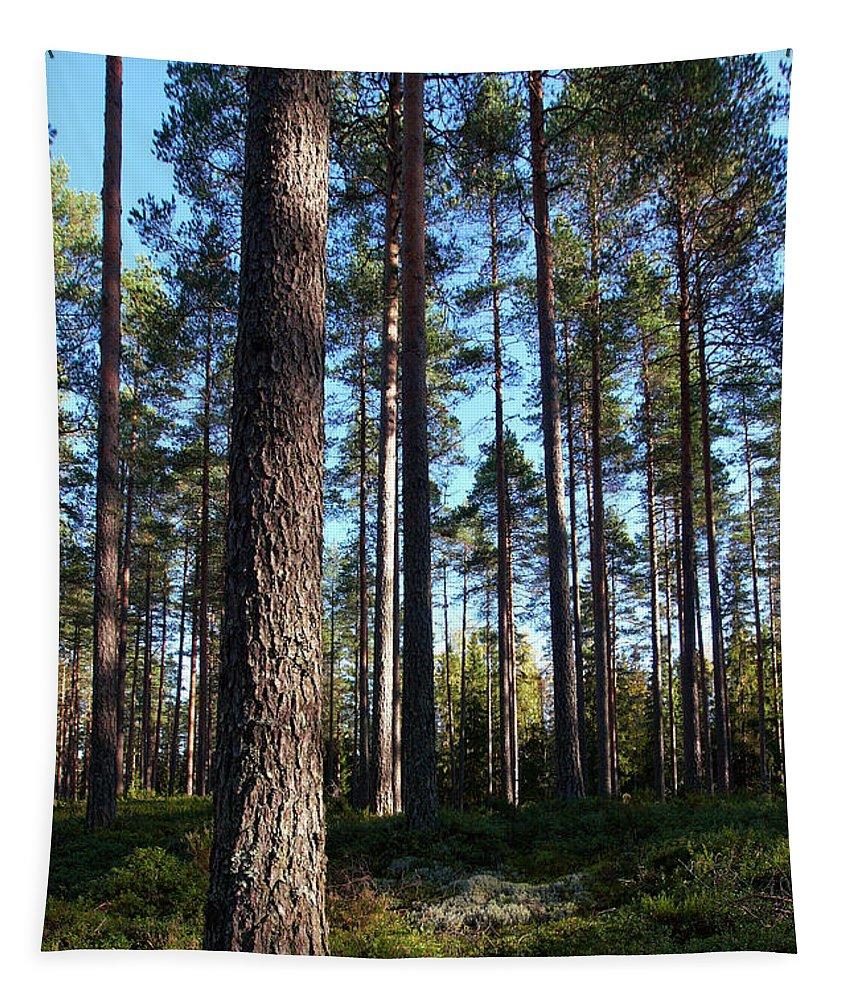 Lehtokukka Tapestry featuring the photograph Pine Forest by Jouko Lehto