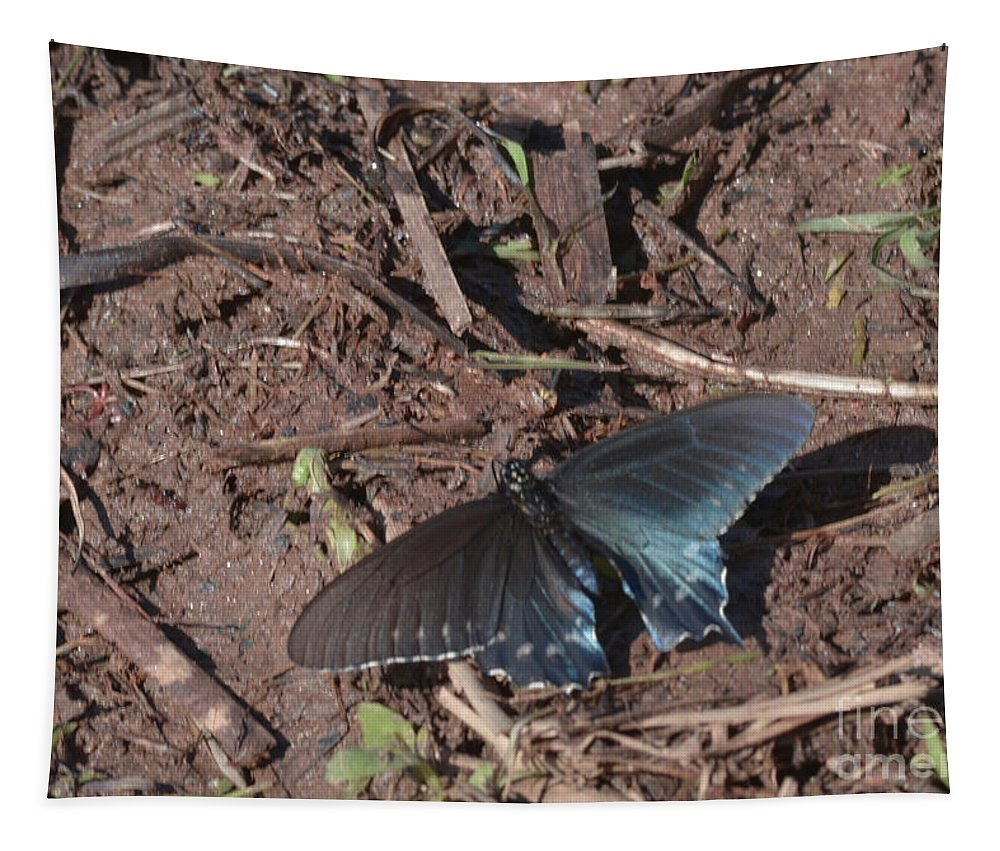 Insect Tapestry featuring the photograph Pipevine Swallowtail Butterfly by Donna Brown
