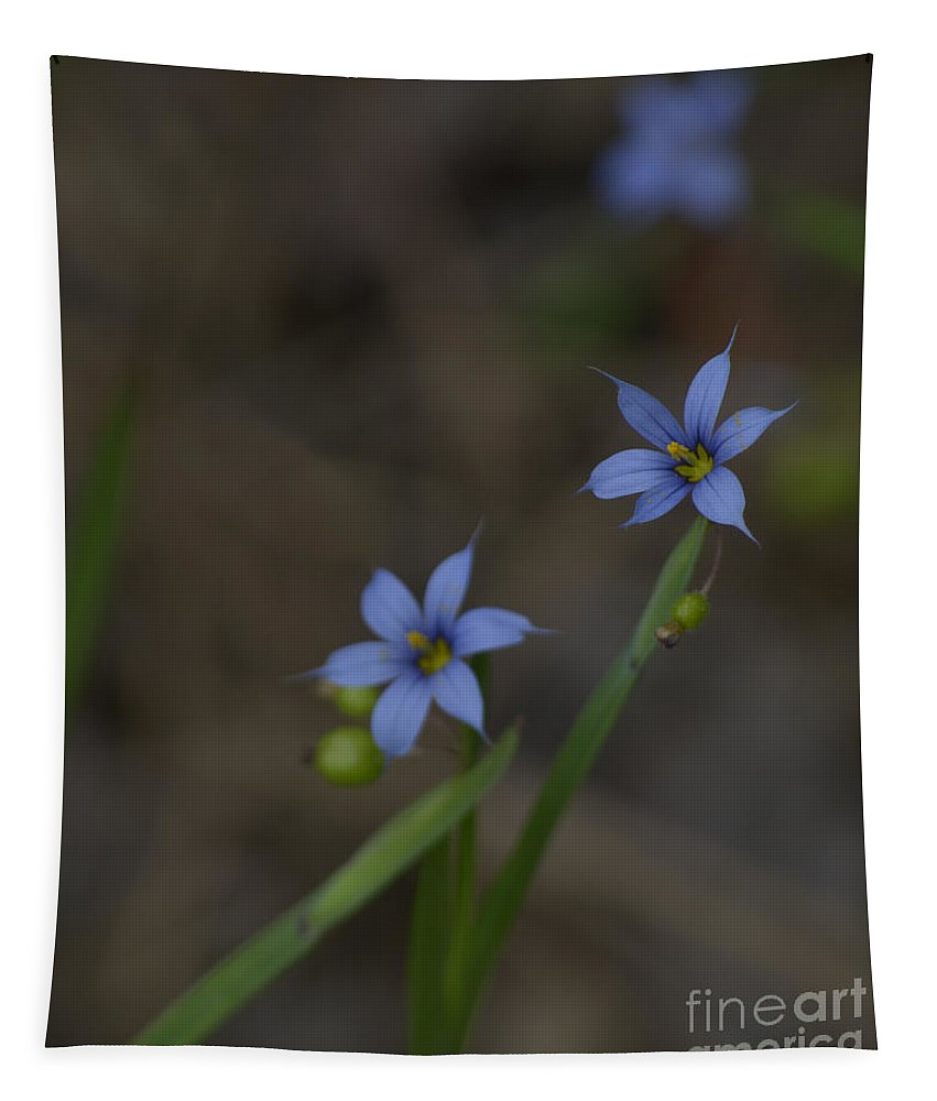 Plant Tapestry featuring the photograph Pointed Blue-eyed Grass by Donna Brown