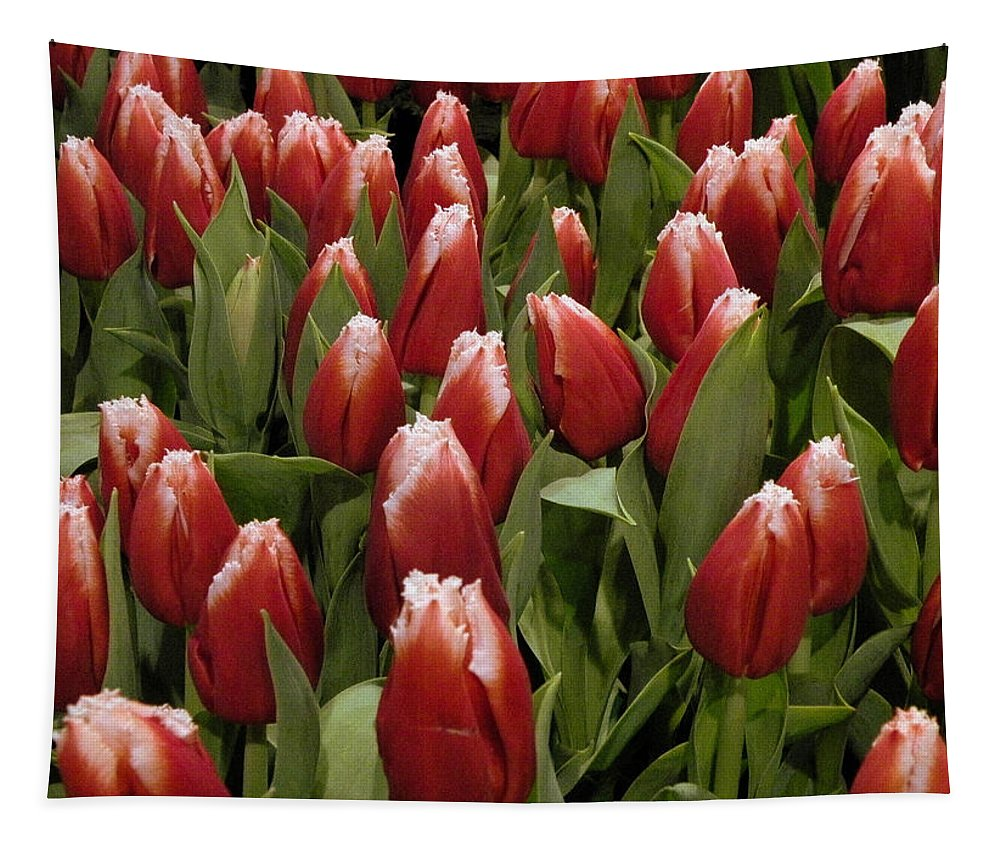 Red Tapestry featuring the photograph Red Tulip Heaven by Trish Tritz