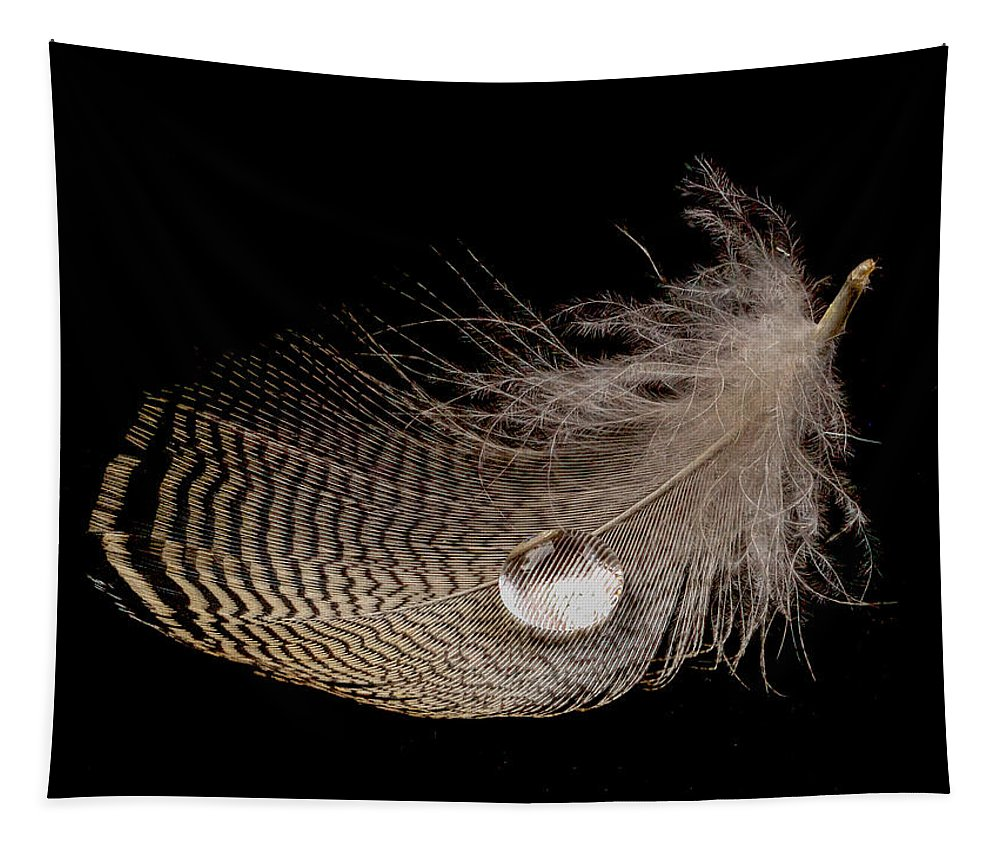 Jean Noren Tapestry featuring the photograph Wet Feather by Jean Noren