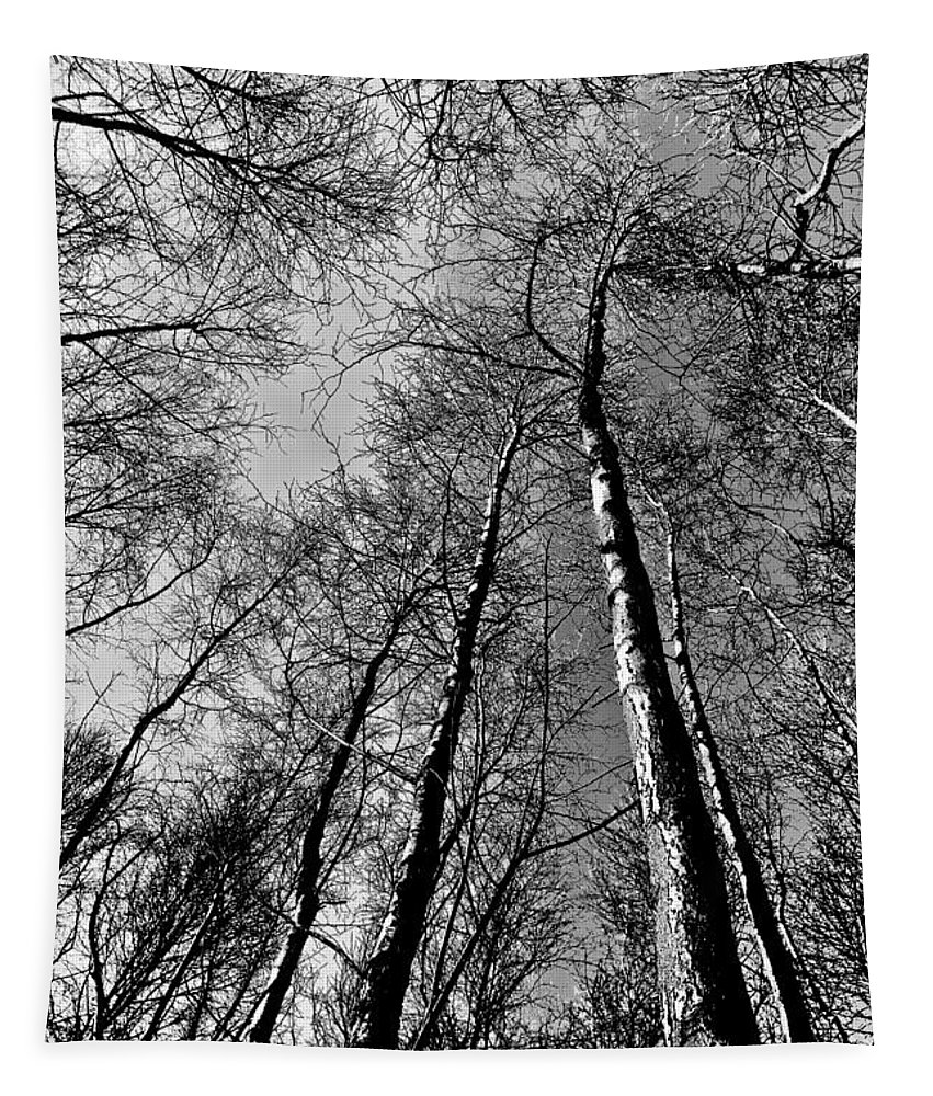 Forest Tapestry featuring the digital art Epping Forest Trees by David Pyatt