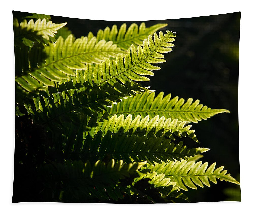 Helvetinjarvi National Park Tapestry featuring the photograph Common Polypody by Jouko Lehto