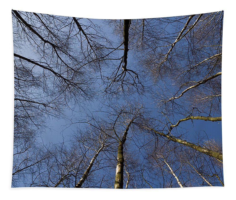 Tree Tapestry featuring the photograph Trees In Epping Forest by David Pyatt