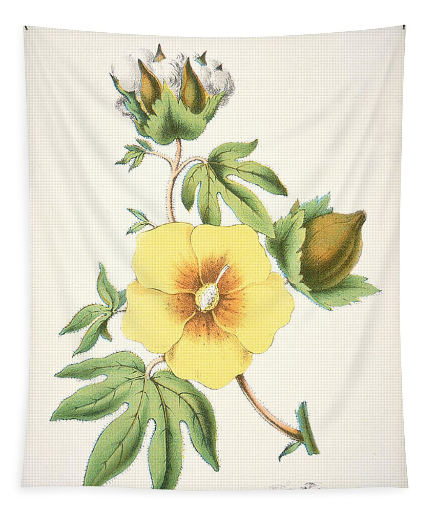 Flower; Agriculture; Agricultural; Crop; Gopypium Arboreum; Branch; Leaf; Bud; Textile; Deep South; Cotton Is King Tapestry featuring the painting A Cotton Plant by American School