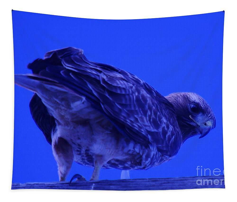 Hawks Tapestry featuring the photograph A Hawk Looks Back by Jeff Swan