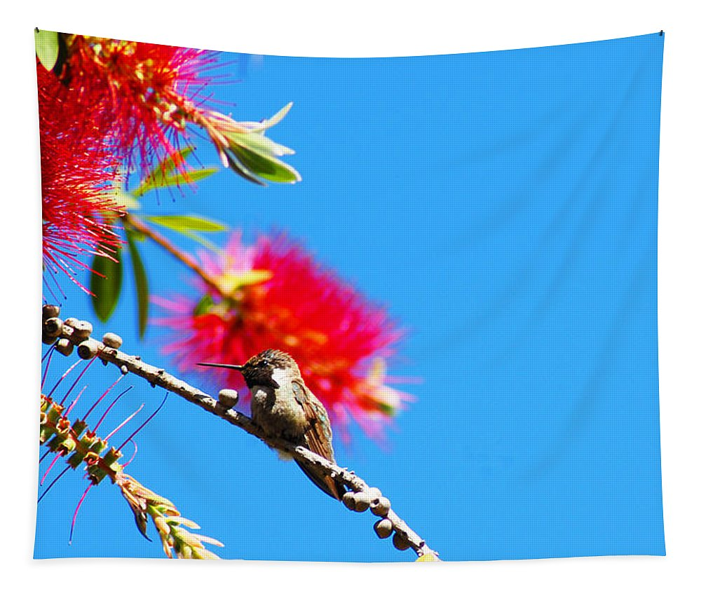 Hummers Tapestry featuring the photograph A Place To Perch by Lynn Bauer