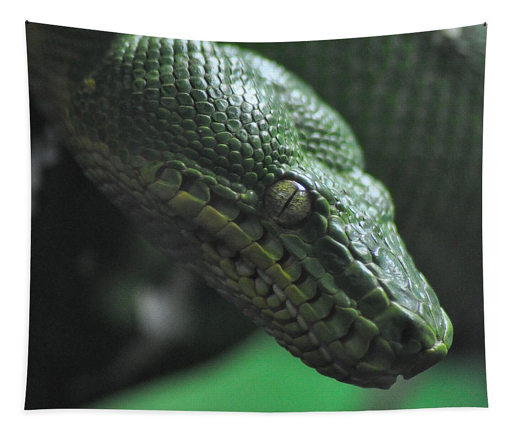Snake Tapestry featuring the photograph A Real Reptile by Trish Tritz