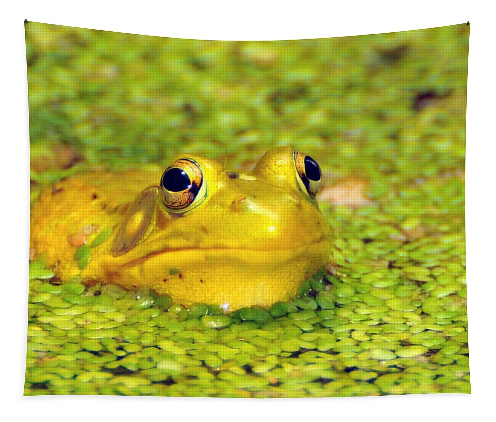 Yellow Bullfrog Tapestry featuring the photograph A Yellow Bullfrog by Paul Ward