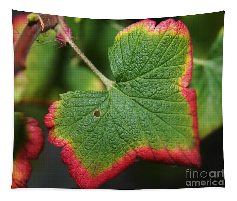 Leaf Tapestry featuring the photograph Almost Autumn by Heather Applegate