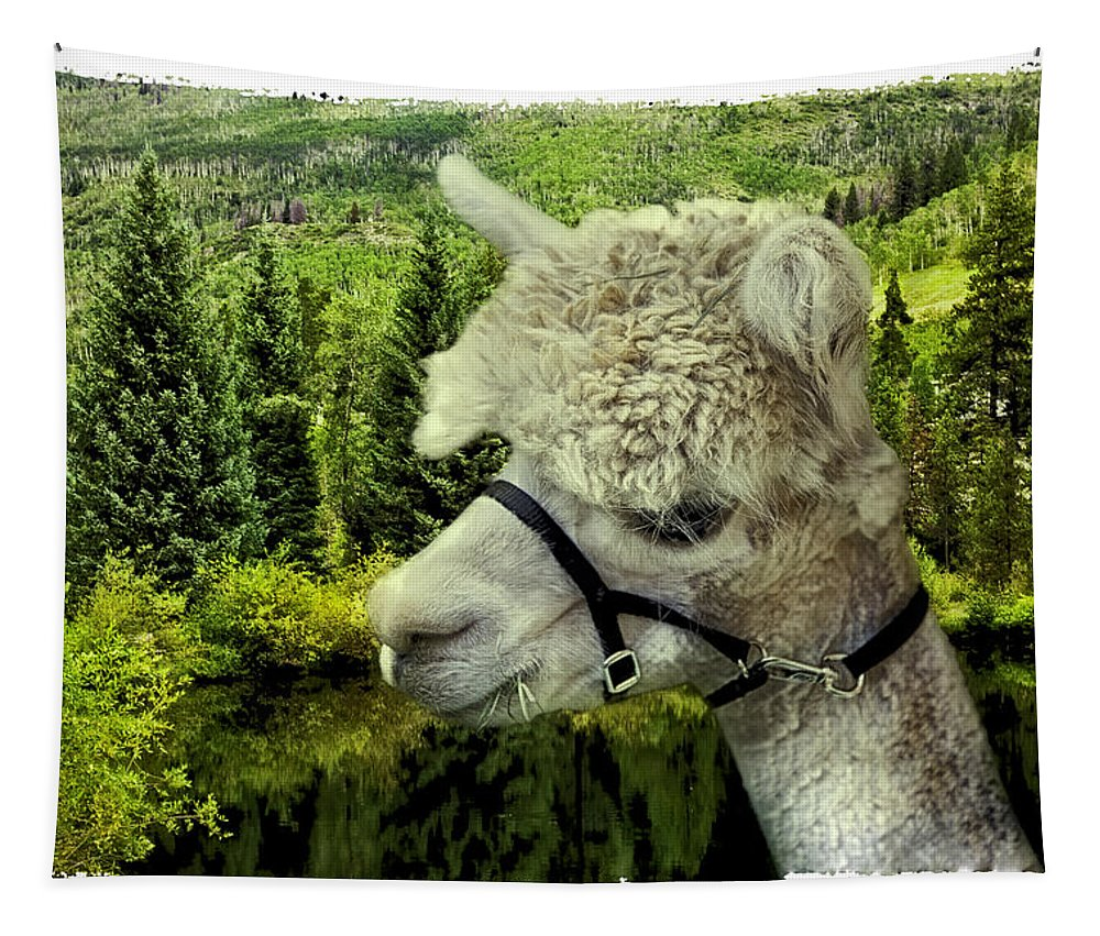 Alpaca Tapestry featuring the photograph An Alpaca In Vail by Madeline Ellis
