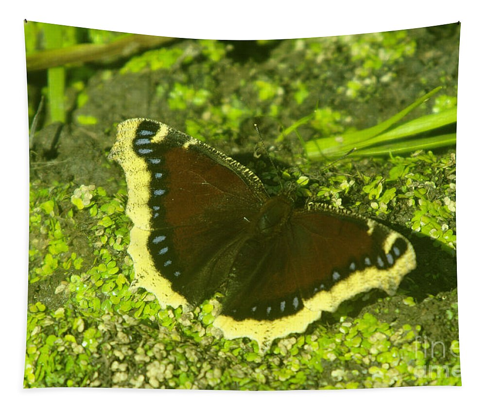 Butterflies Tapestry featuring the photograph An October Butterfly by Jeff Swan