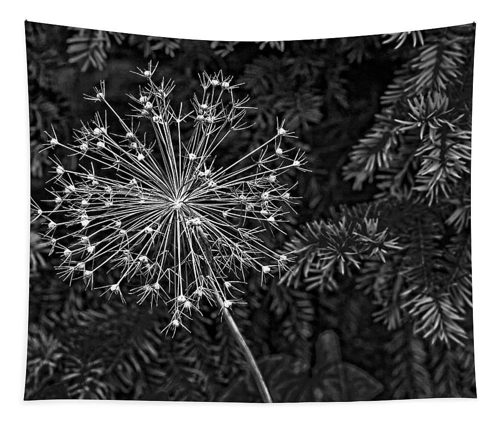 Flower Tapestry featuring the photograph Anatomy Of A Flower Monochrome 2 by Steve Harrington