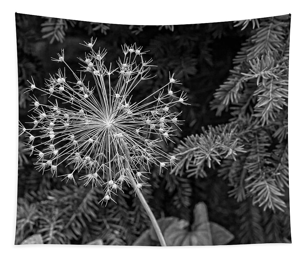 Flower Tapestry featuring the photograph Anatomy Of A Flower Monochrome by Steve Harrington