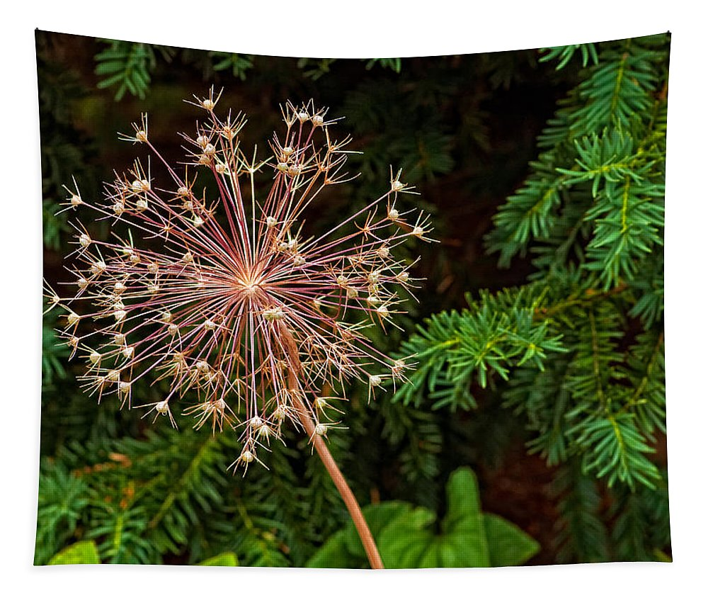 Flower Tapestry featuring the photograph Anatomy Of A Flower by Steve Harrington