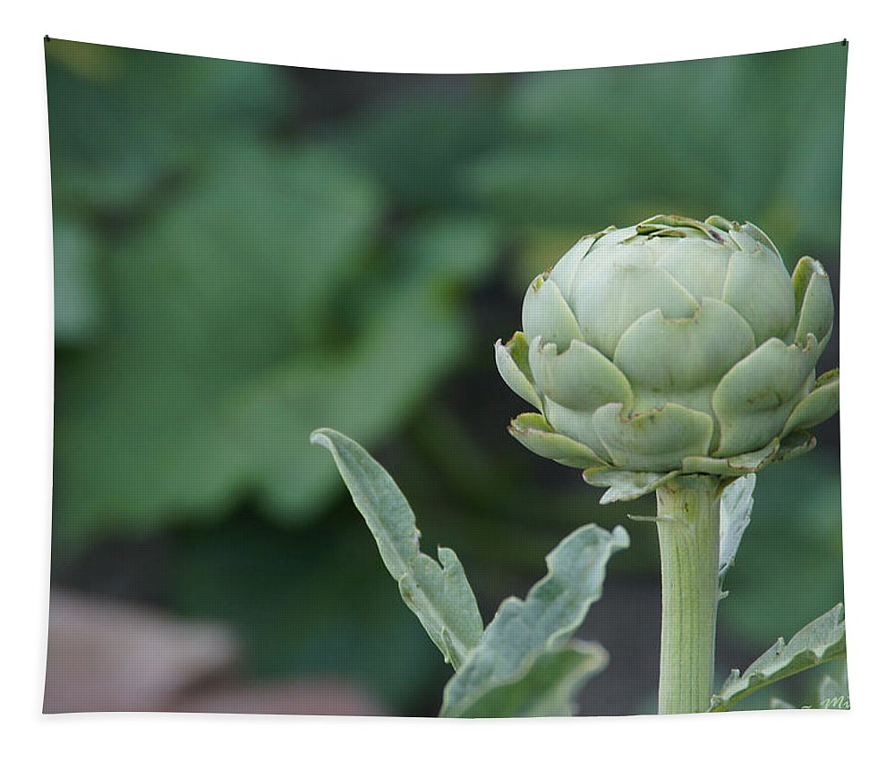 Artichoke Tapestry featuring the photograph Artichoke In The Garden by Mick Anderson