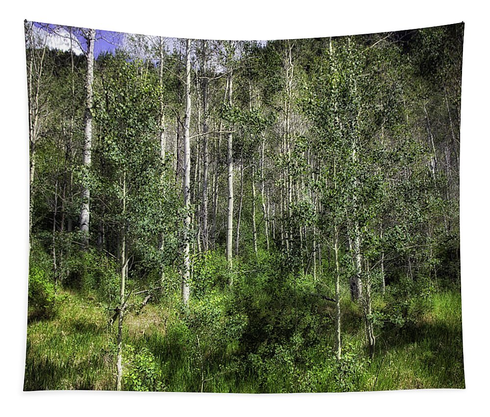 Trees Tapestry featuring the photograph Aspen Trees - Vail by Madeline Ellis