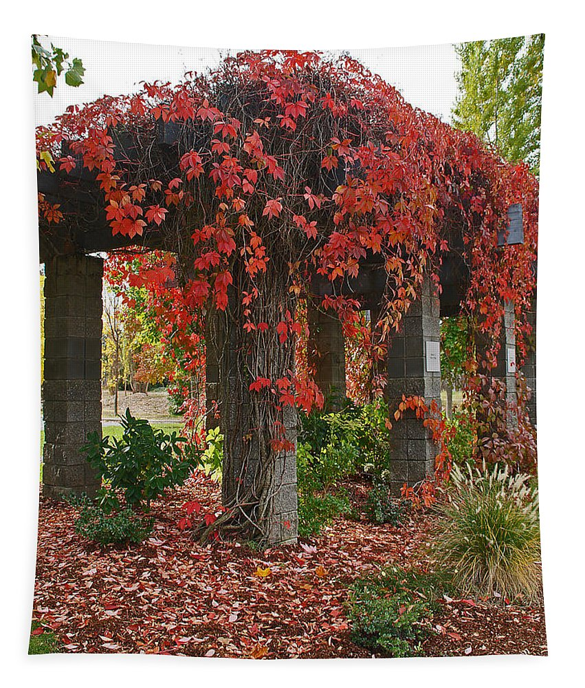 Autumn Tapestry featuring the photograph Autumn Arbor In Grants Pass Park by Mick Anderson