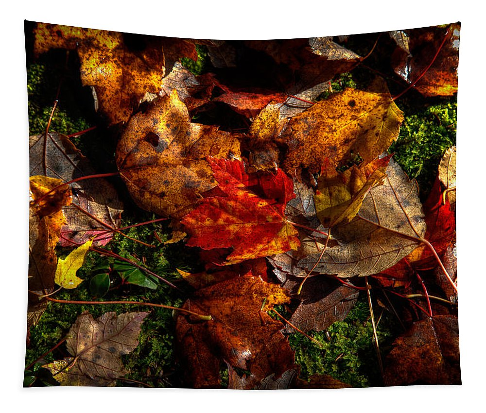 Autumn Tapestry featuring the photograph Autumn Leaves On The Moss by David Patterson
