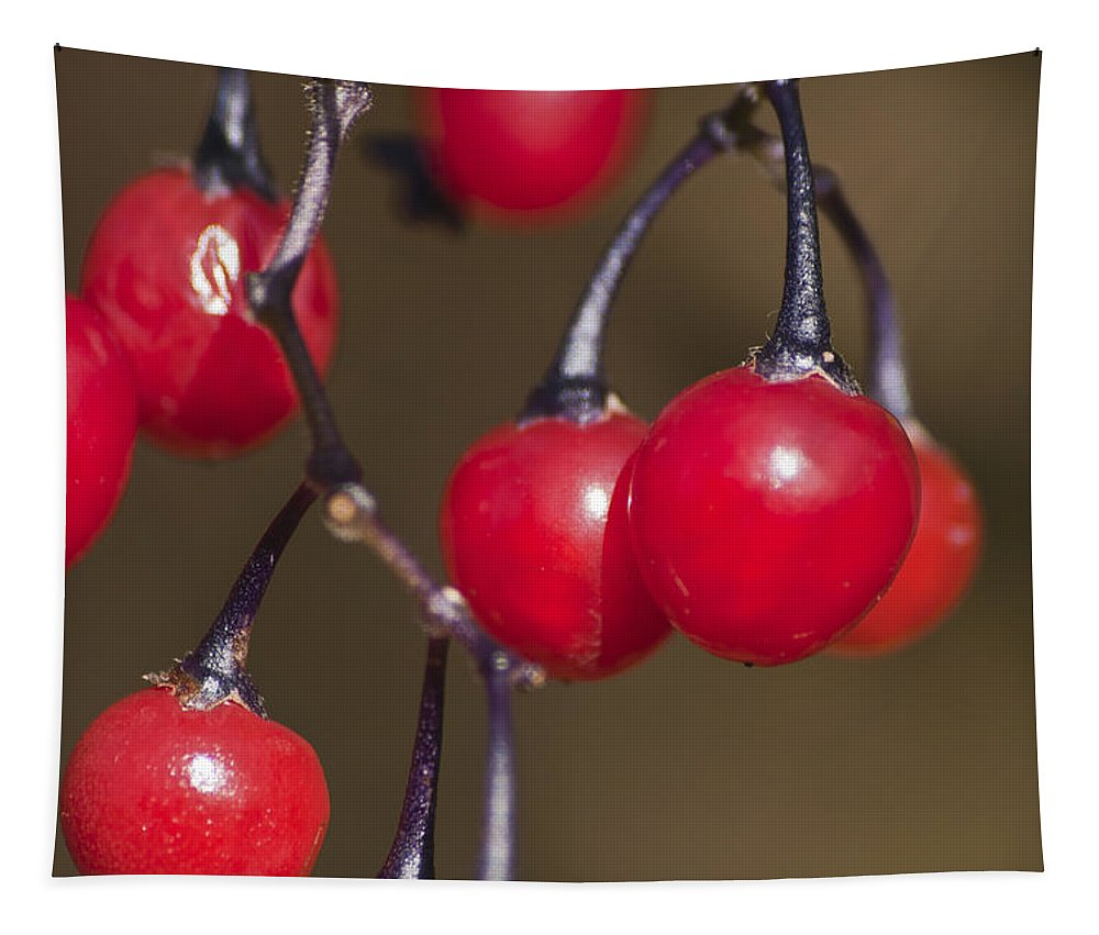 Autumn Red Berries Tapestry featuring the photograph Autumn Red Berries by Steve Purnell