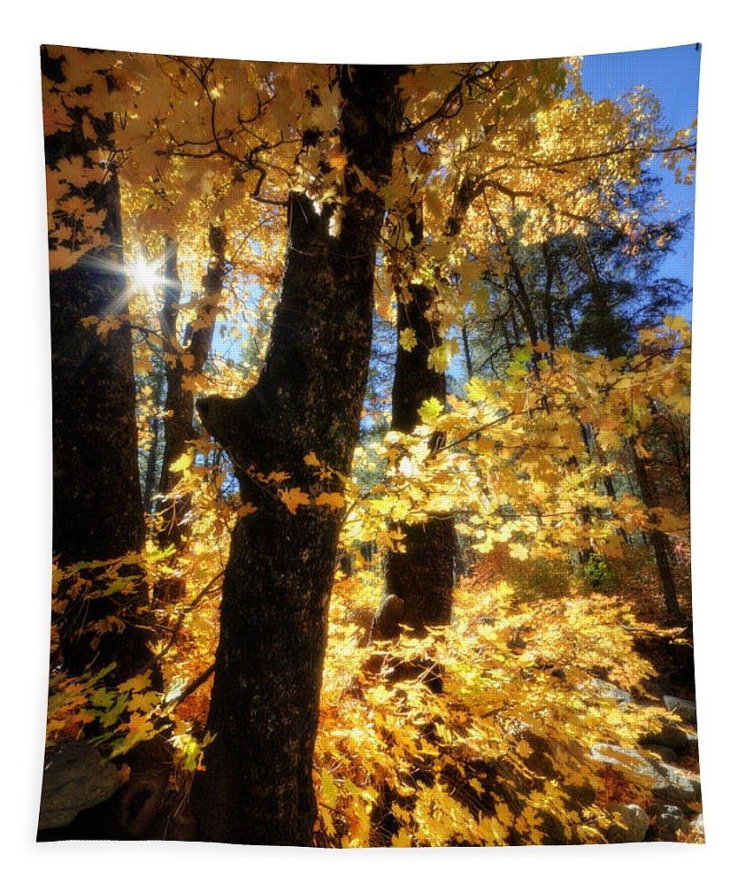 Fall Tapestry featuring the photograph Autumn Splendor by Saija Lehtonen