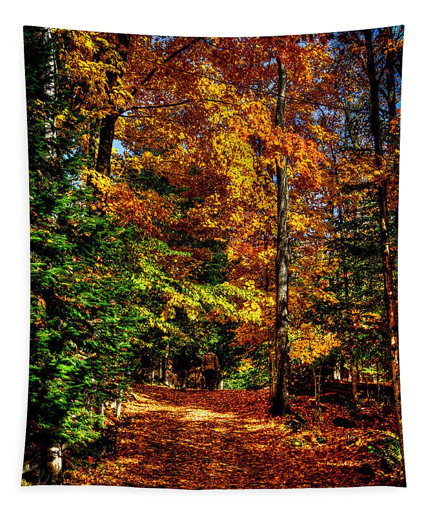Adirondack's Tapestry featuring the photograph Autumn Walk by David Patterson