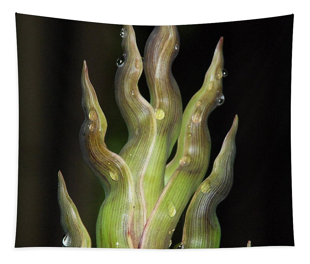 Bamboo Tapestry featuring the photograph Baby Bamboo by Richard Bryce and Family