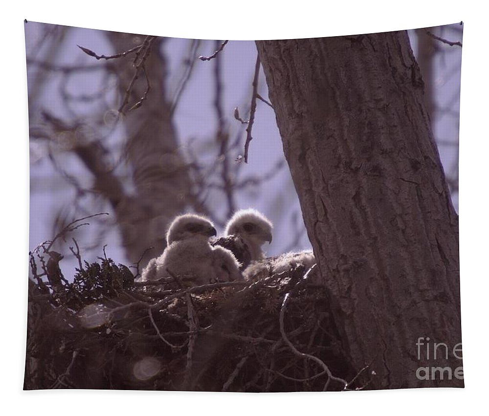 Birds Tapestry featuring the photograph Baby Hawks by Jeff Swan