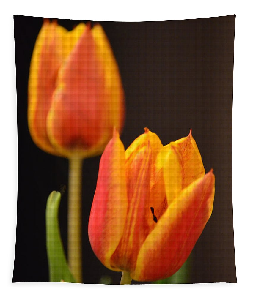 Tulip Tapestry featuring the photograph Baby Tulips Close Up Macro by Sandi OReilly