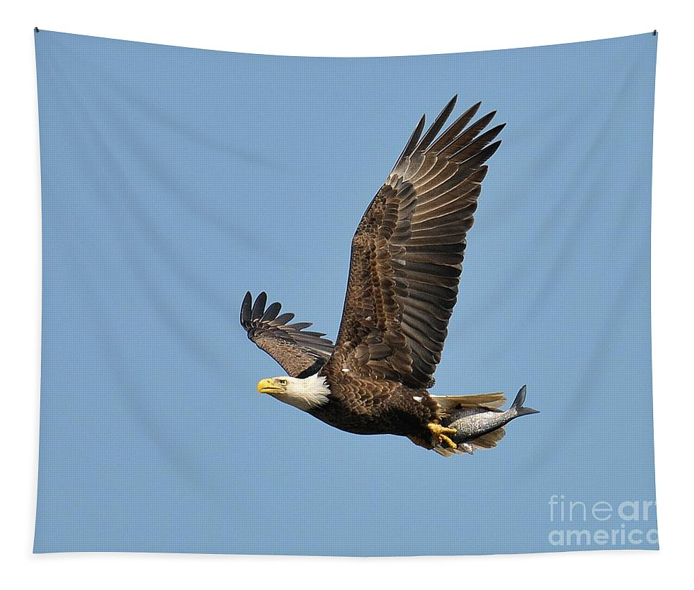 Bald Eagle Tapestry featuring the photograph Bald Eagle by Craig Leaper