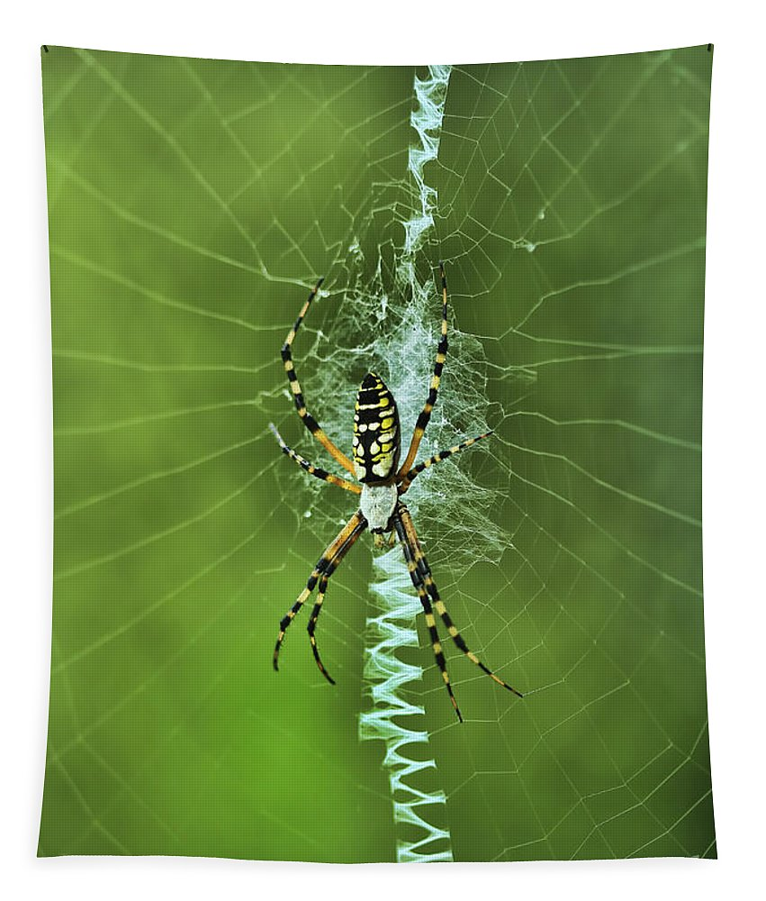 Spider Tapestry featuring the photograph Banana Spider With Web by Deborah Benoit