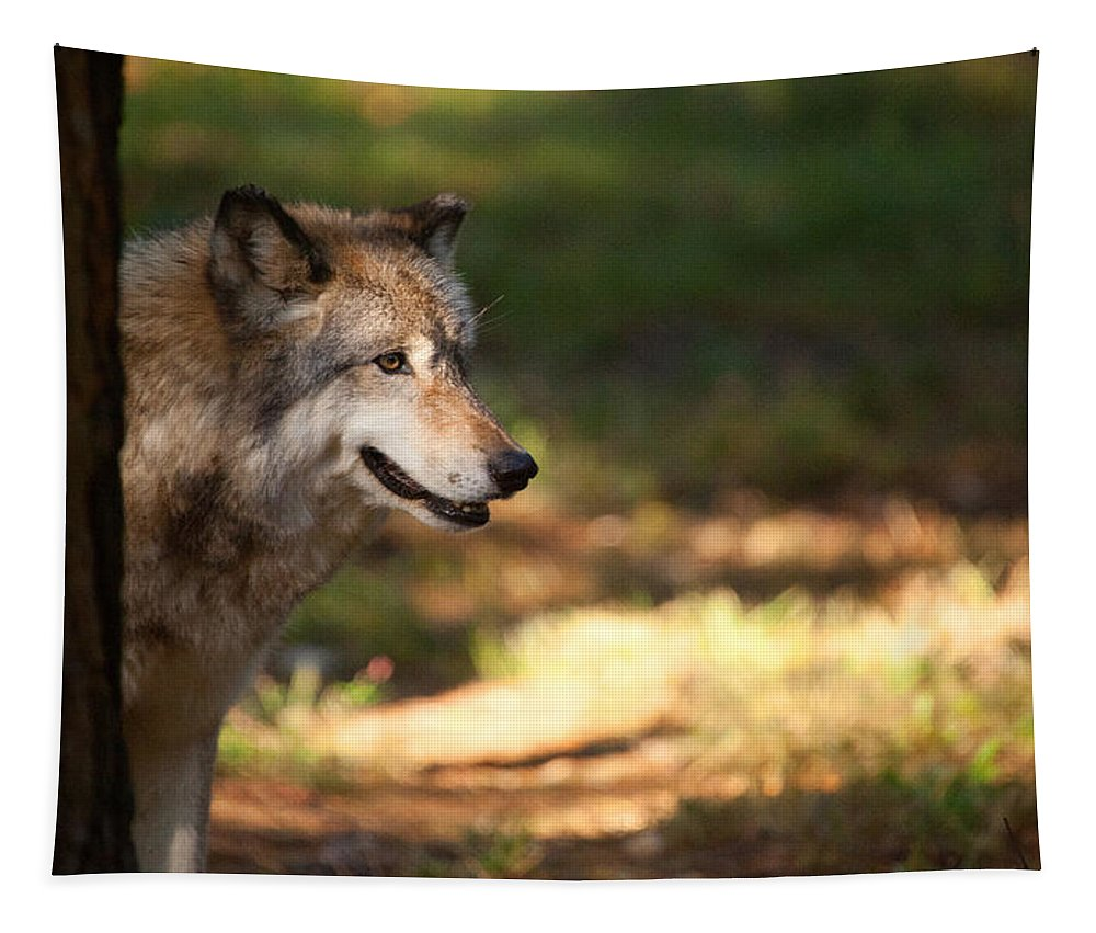 Wolf Tapestry featuring the photograph Behind The Tree by Karol Livote