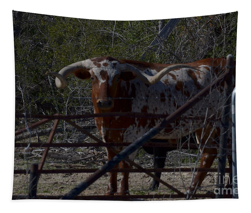 Animal Tapestry featuring the photograph Big Bull Long Horn by Donna Brown