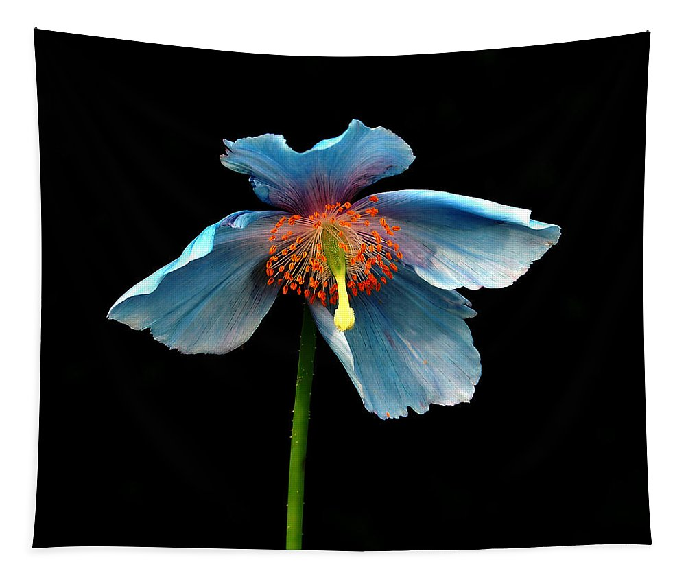Macro Tapestry featuring the photograph Blue Beauty by Richard Ortolano