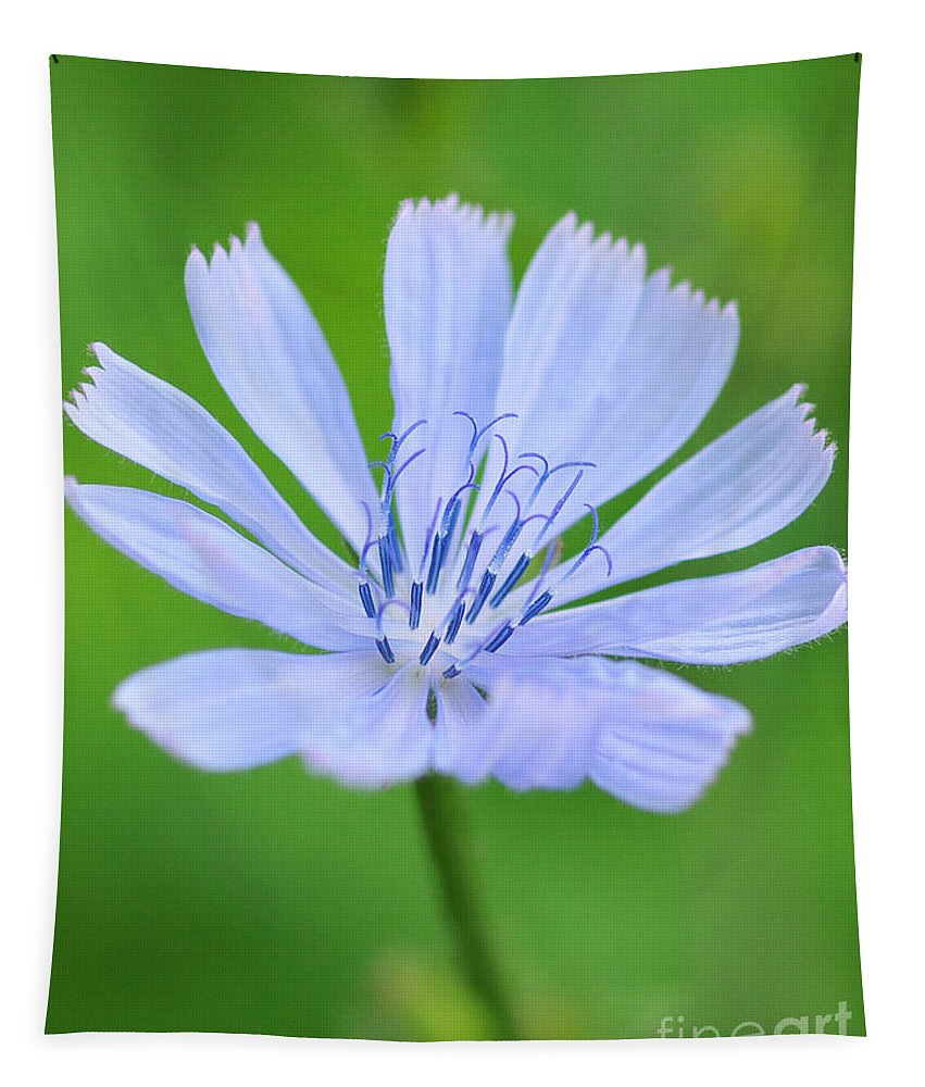 Blue Tapestry featuring the photograph Blue Flower by Paul Ward