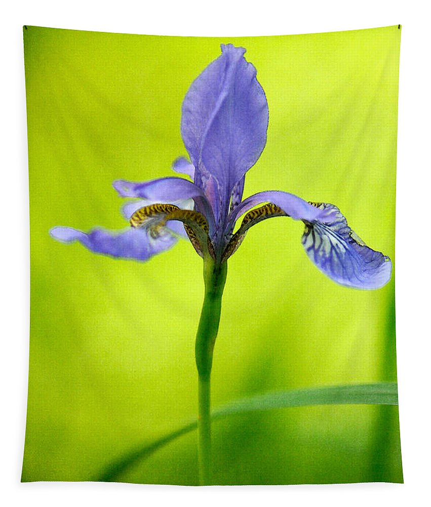 Iris Tapestry featuring the photograph Blue Japanese Iris by Lois Bryan