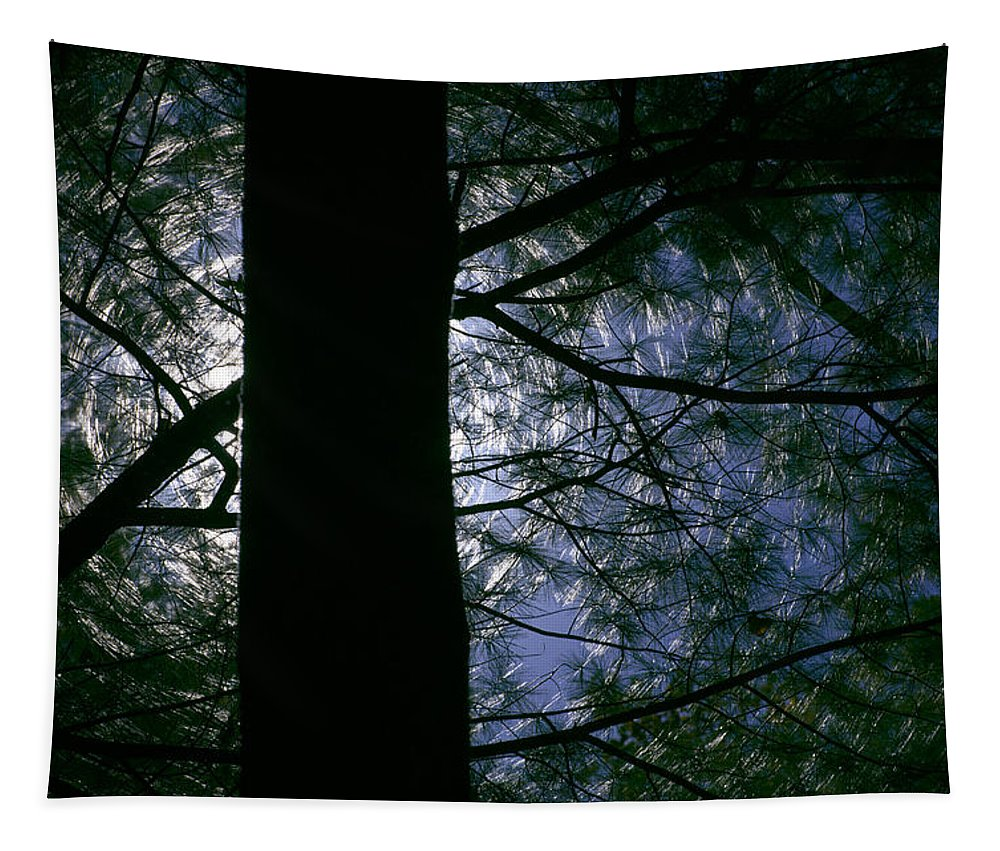 Tree Tapestry featuring the photograph Bring On The Sun by Trish Tritz