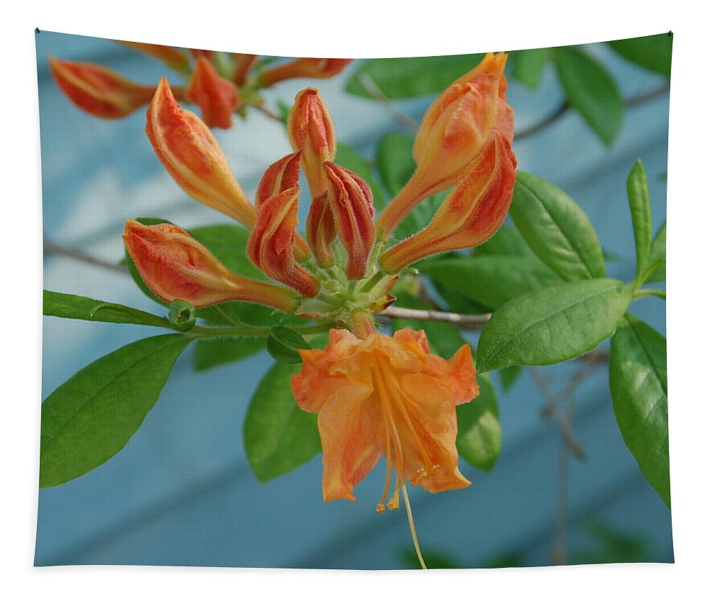 Flower Tapestry featuring the photograph Budding Azalea by Aimee L Maher ALM GALLERY