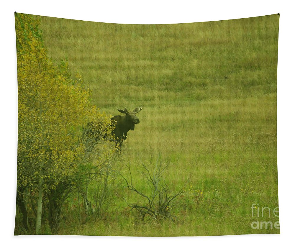 Moose Tapestry featuring the photograph Bull Moose On The Loose by Jeff Swan