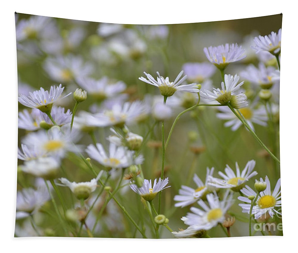 Flower Tapestry featuring the photograph Bushy Astor by Donna Brown