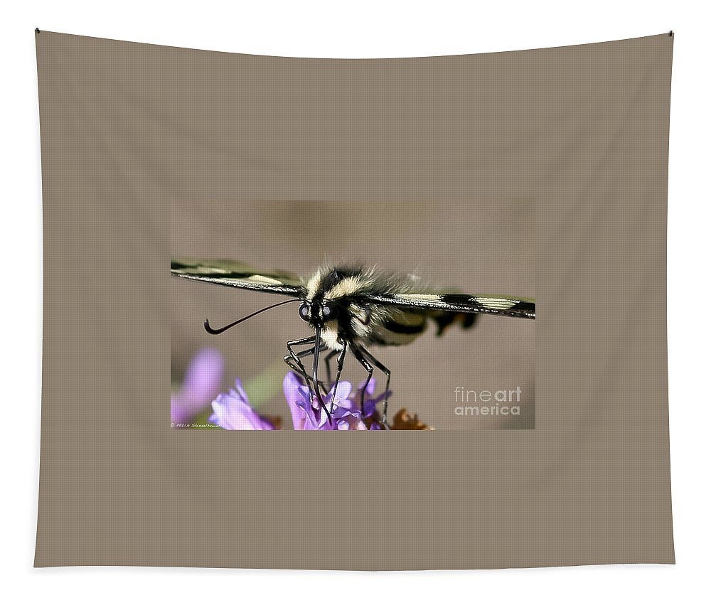 Butterfly Tapestry featuring the photograph Butterfly Closeup by Mitch Shindelbower