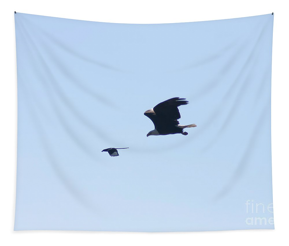 Bald Eagle Tapestry featuring the photograph Bye Bye Magpie by Mitch Shindelbower