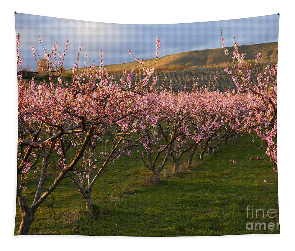 Cherry Tapestry featuring the photograph Cherry Blossom Pink by Mike Dawson