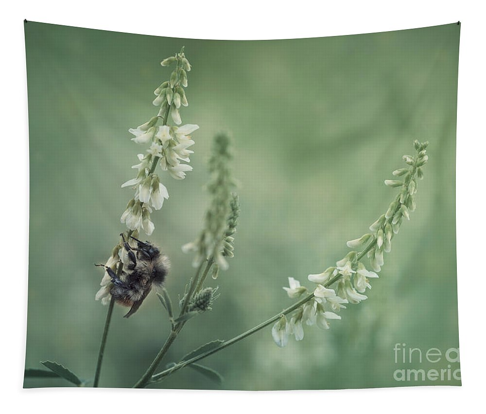 Sweet Clover Tapestry featuring the photograph Collecting The Summer by Priska Wettstein