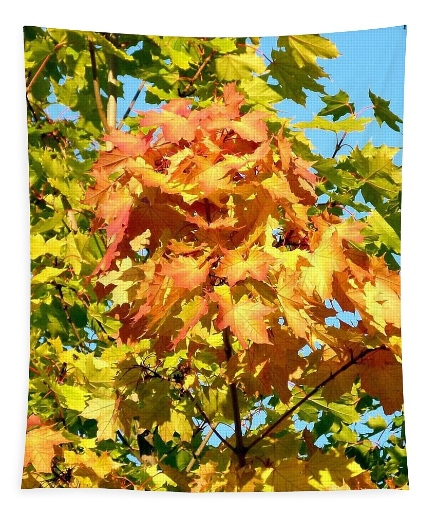 Maple Leaves Tapestry featuring the photograph Colorful Leaf Cluster by Will Borden