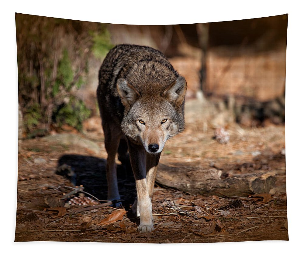 Wolf Tapestry featuring the photograph Coming Right At You by Karol Livote